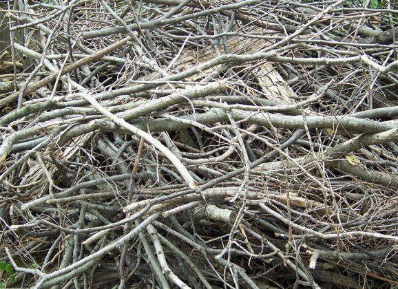 Vendredi 28 octobre – le conteneur à branches et le dépôt pour les résidus verts et feuilles d'automne ne seront plus accessibles