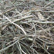 Retour des conteneurs de résidus verts et de branches les VENDREDIS