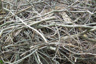 Nouvelle procédure pour la collecte des branches sur le territoire de Rigaud