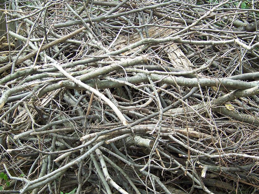 22 OCTOBRE – collecte des branches sur le territoire de Rigaud **** INSCRIPTION NÉCESSAIRE ****