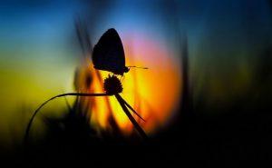 papillons de nuit 2