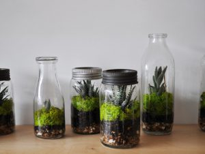 Confection d'un terrarium