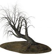 Une procédure doit être respectée si vous souhaitez abattre un arbre