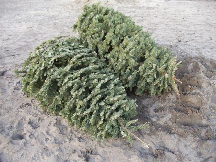 Collecte spéciale pour les arbres de Noël le 25 JANVIER