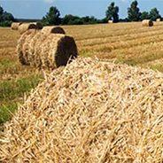 Producteurs agricoles recherchés