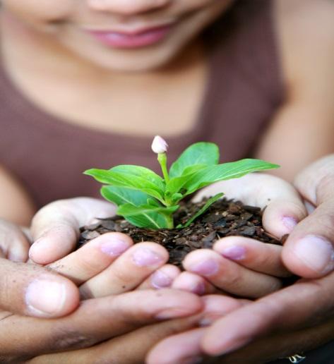 Atelier de plantation de semis intérieurs