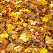 Il n'y a plus de collecte de feuilles et de résidus verts en 2020