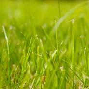 Herbes hautes et propreté des aires libres