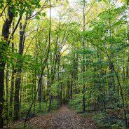 Participez à la grande randonnée des Sentiers de L'escapade