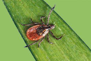 CONFÉRENCE: Connaissez-vous vraiment la maladie de Lyme?