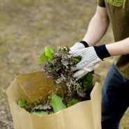 MERCREDI 1ER AOÛT: une collecte des résidus verts se fera sur le territoire