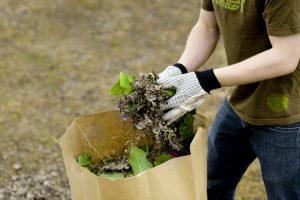 À PARTIR DU 4 JUILLET – La collecte des résidus verts se fera aux deux semaines