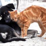 Renouvellement des licences pour tous les chiens et les chats