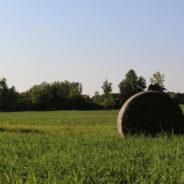 À la recherche de producteurs agricoles propriétaires à Rigaud