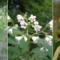 Connaissez-vous les espèces floristiques indigènes des milieux terrestres du Québec ?