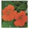 Le top 12 des plantes pour le potager fleuri