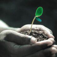 Distribution gratuite de plants le 15 mai prochain aux citoyens de Rigaud