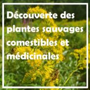 * COMPLET * DIMANCHE 12 SEPTEMBRE – Découverte des plantes sauvages comestibles et médicinales