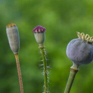 La grainothèque de Rigaud vous invite à participer à sa première collecte de semences cet automne !
